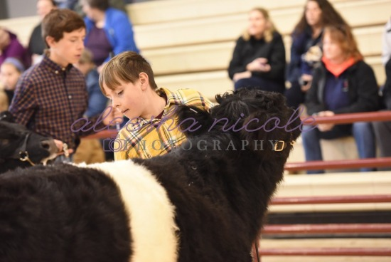 Youth Steer Ring Shots
