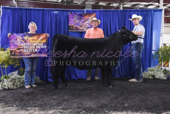 Percentage Heifer- Backdrops